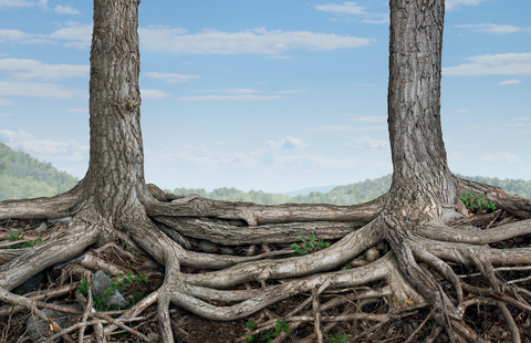 Slightly Obsessed #245: Are You Rooted?